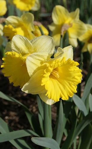 Narcissus Las Vegas